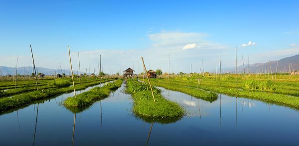Плавающие огороды народности инта. Мьянма