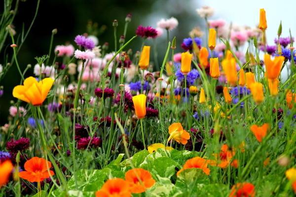 Цветочный микс с васильками