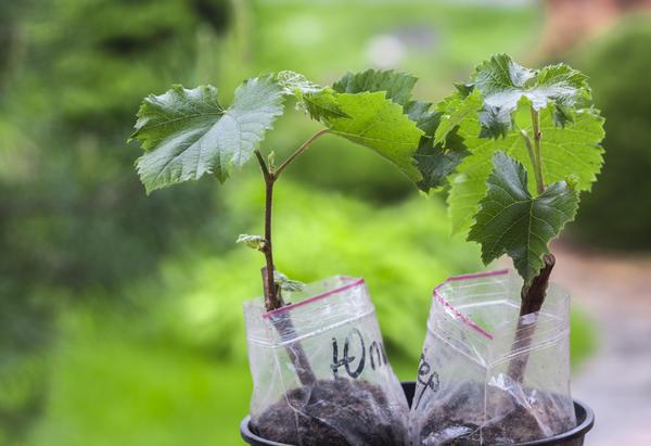 Растения в контейнерах не требуют немедленной высадки в грунт