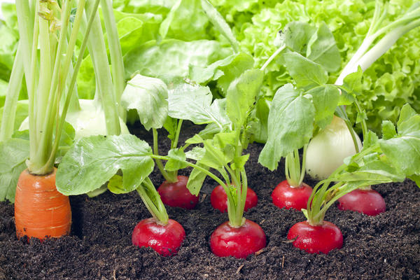 Список овощных культур нужно продумать