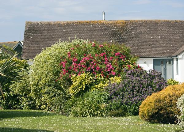 Чтобы создать уют на приусадебном участке, необходимо создавать не только цветники, или клумбы, но и высаживать декоративные кустарники
