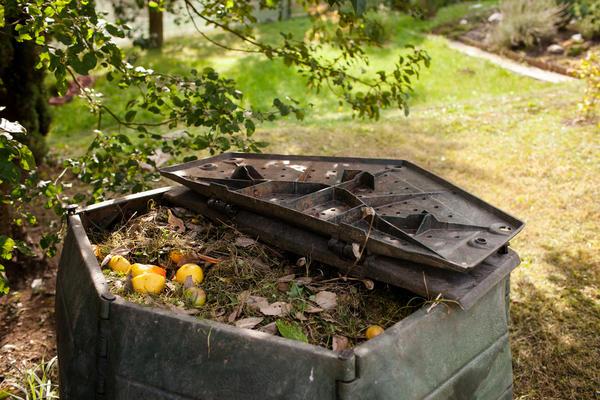 Компостируйте все органические остатки