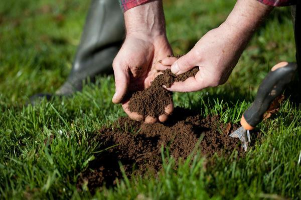 Постарайтесь определить тип почвы по механическому составу