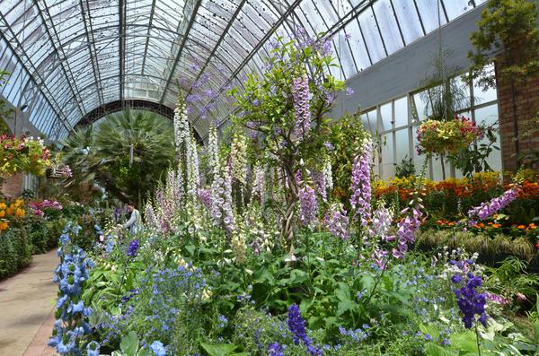 Зимний сад состоит из несущего каркаса и элементов остекления.