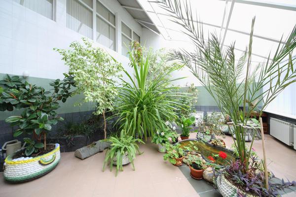 Трехфасадный зимний сад