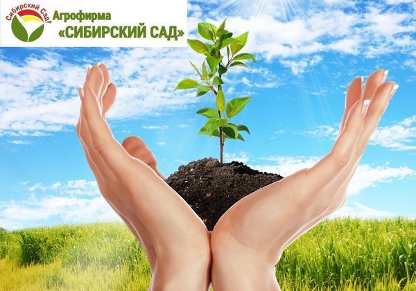 Отзыв о посадочном материале производителя Сибирский сад