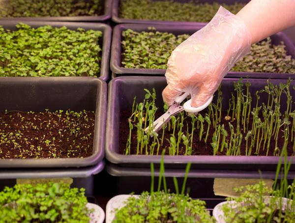 Приспособления для выращивания рассады