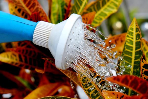Если растений в зимнем саду культивируется не много, то, конечно, поливать их можно вручную