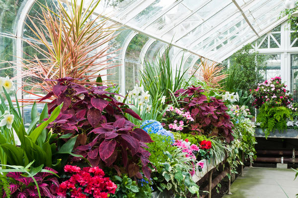 Зимний сад - оранжерея