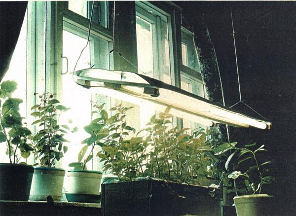 Самодельный осветитель для рассады