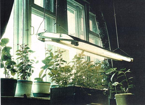 Осветитель для выращивания рассады, состоящий из двух ламп дневного света