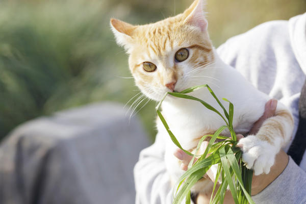 Ешь траву!