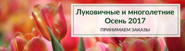 Открыт приём заказов на осенний ассортимент луковичных и многолетних растений