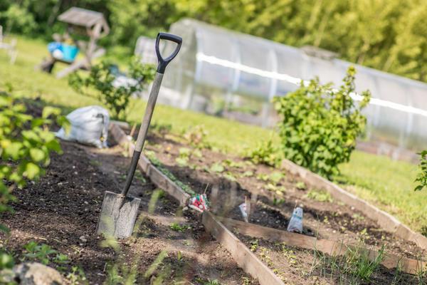 Во время беременности в саду лучше не работать. Если такая необходимость все же есть, рекомендуется минимизировать нагрузки
