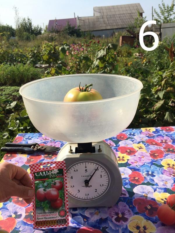 Масса одного томата сорта Яркая малиновка