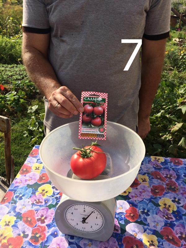 Масса одного томата сорта Малиновое вино