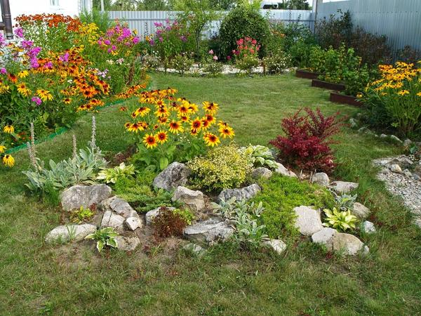 Любимые цветы в моём маленьком саду для души