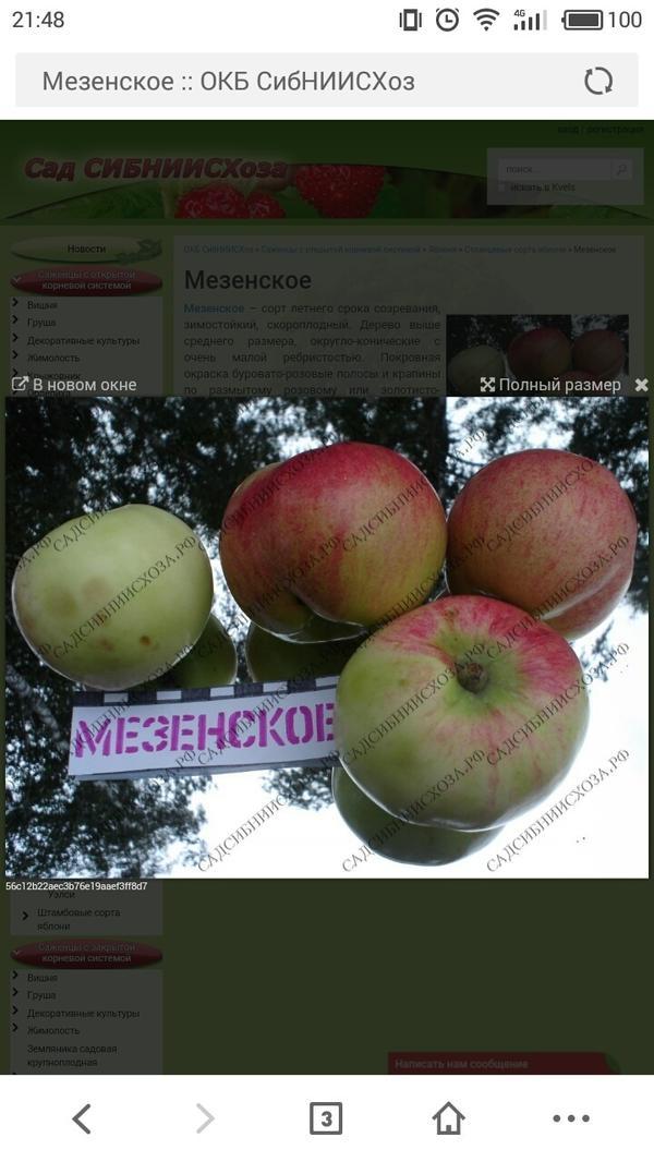 мезенское