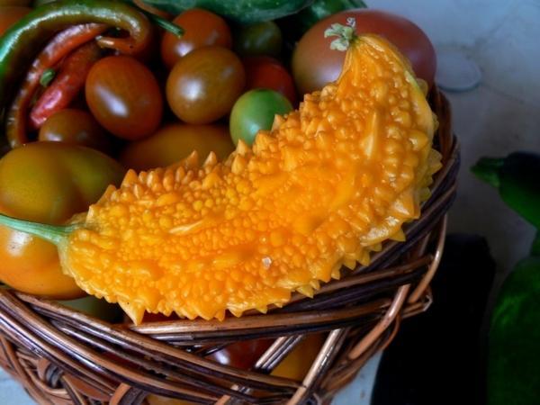 Один из плодов момордики, выращенный мною