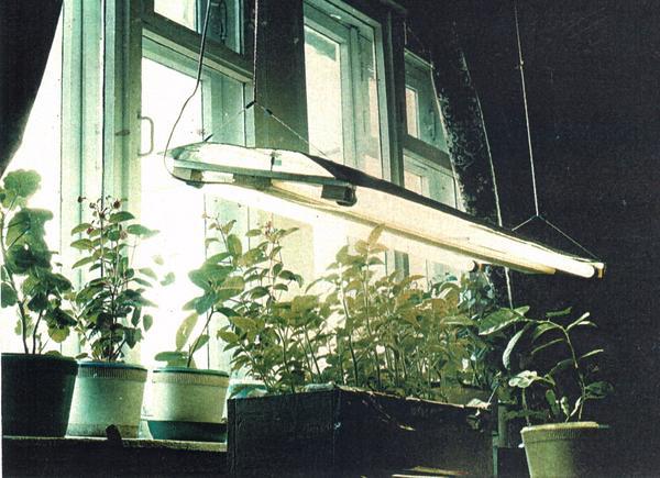 Вот раньше были лампы дневного света.