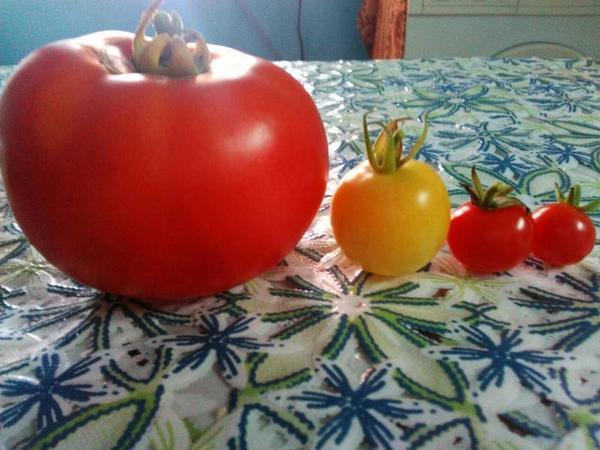 """Первый """"Денежный мешок"""", Белая вишня и две Чудо-детки"""