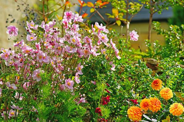 Эти поздние цветы примиряют нас с тем, что еще одно лето закончилось