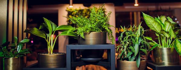 Стартовал конкурс домашних растений