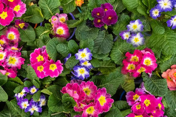 Поздравляем победителей конкурса домашних растений