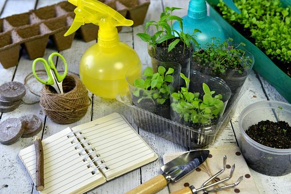 Тестирование семян овощей - увлекательное дело!