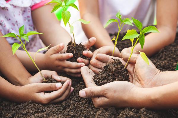Объявляем набор группы тестирования семян