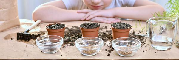 Группа тестирования семян овощей