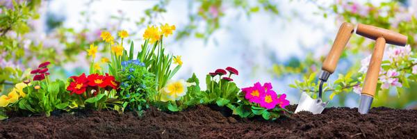 Секреты выращивания цветов