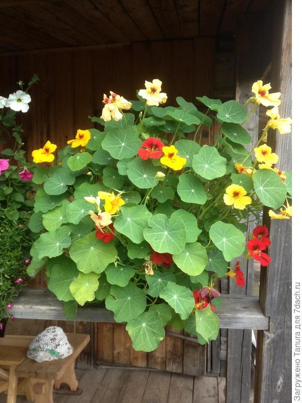 Цветы у бани