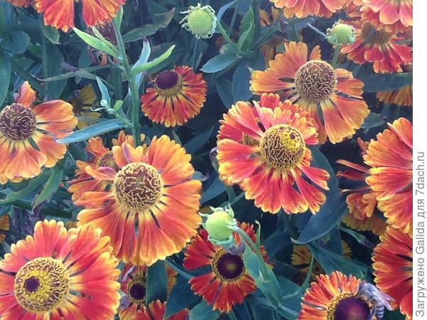 А этот цветок куст не знаю как называется