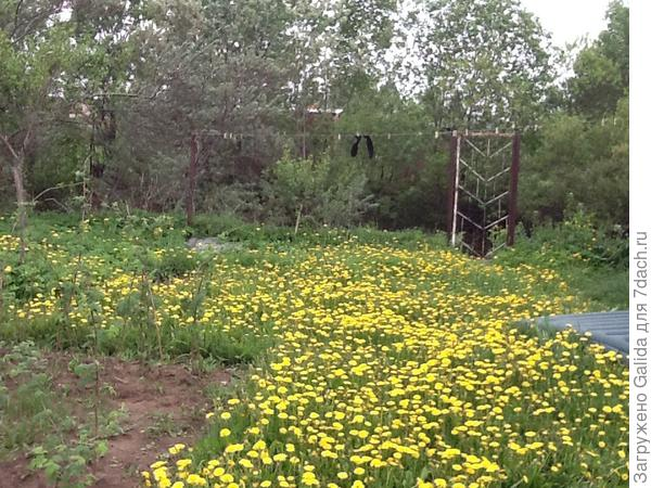 Мой газон