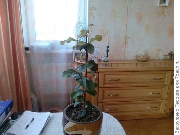 Незнакомое растение