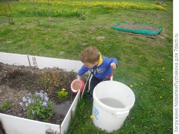 Ярослав поливает грядку