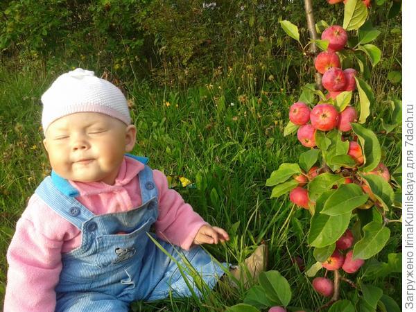 какие кислые яблоки!