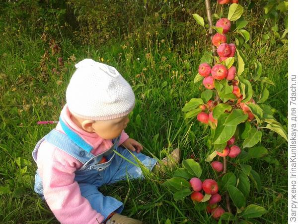 Даше нравятся яблоки