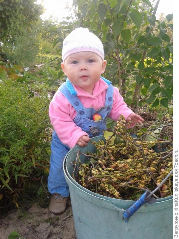 Дашенька убирает сухую листву