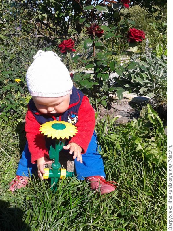 сажаем цветок