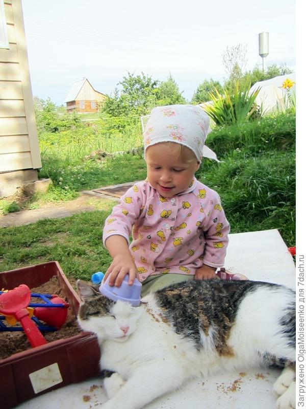 кот с ребенком в песке