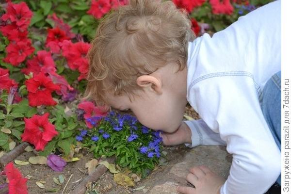 Лёва и цветы