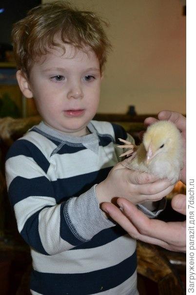 Лева и цыпленок
