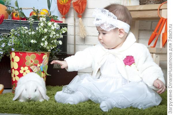 знакомство с кроликом