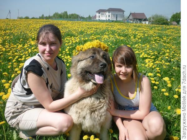 Чудесное лето....наша любимица Зена :)