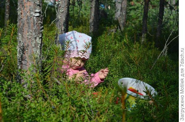 Карельский лес....вот такое у нас лето :)
