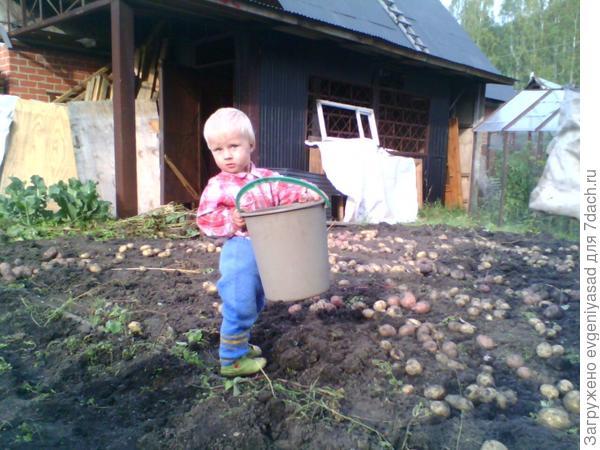 Бабушка сказала, что пора собирать урожай в мешки