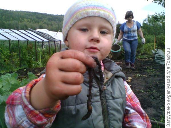 А вот и червяк))) Рыбке он очень понравится