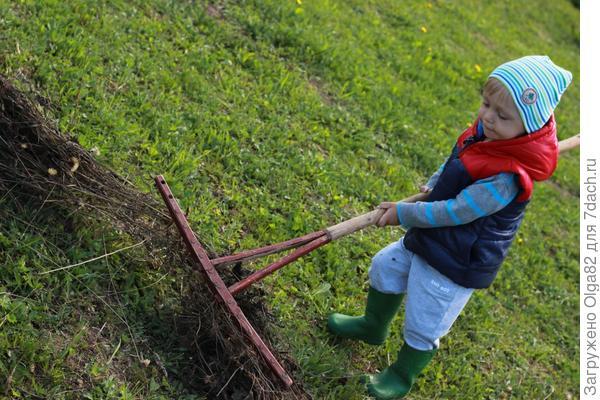 Мирон загребает скошенную траву